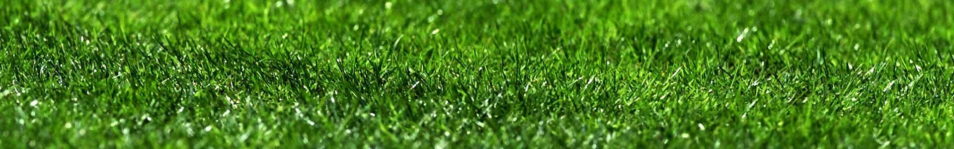 Græs-slide